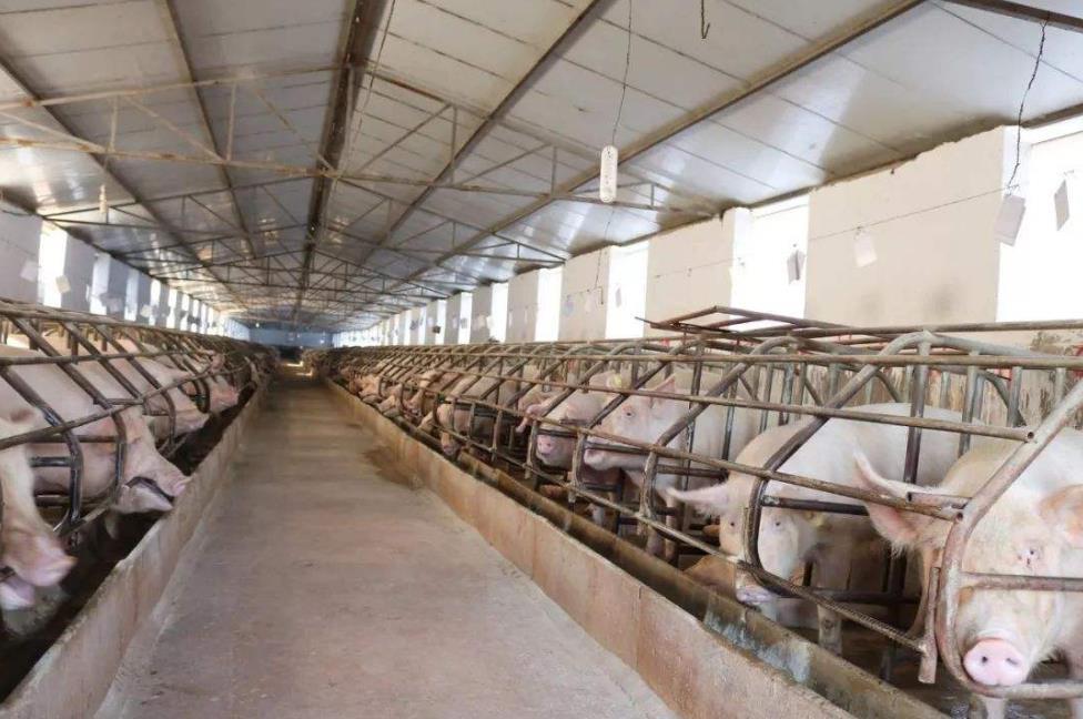 中国特产商城_农业货源-遵义森宏农业科技有限公司
