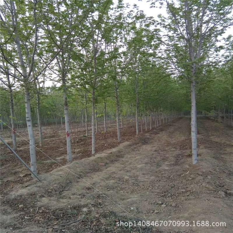 贵州城市绿化_城市绿化实施相关-贵州省仁怀市家好绿化有限公司