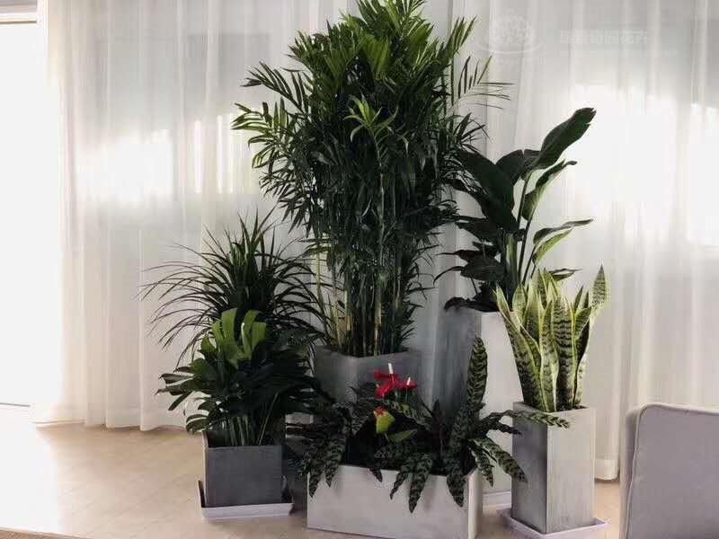 绿植租赁时间_海淀室内观叶植物-北京九州祥云园林绿化有限公司