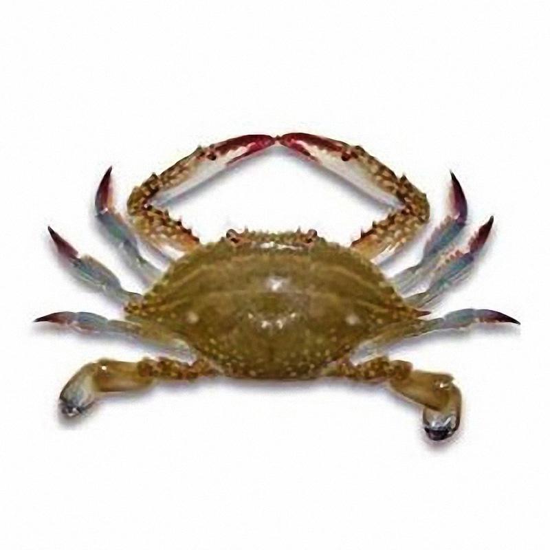 成都梭子蟹多少一斤_成都蟹类市场-郫都区昌盛水产经营部