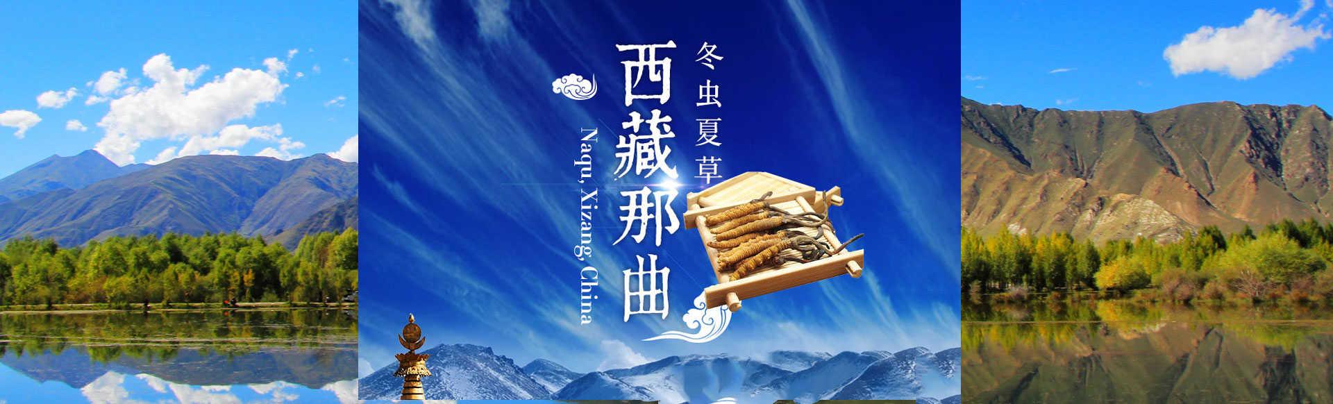 我们推荐野生中药材货源_参类滋补品相关-林芝藏芝缘商贸有限公司