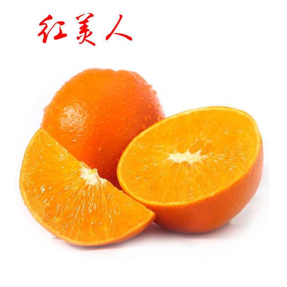 四川红美人批发_成都柑桔、橙、柚-四川省醉忆小橘农业发展有限公司