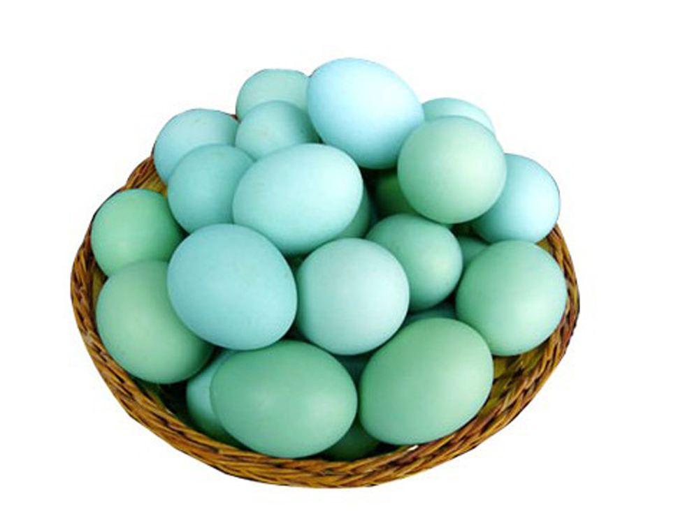 我们推荐散养绿壳鸡蛋_其它畜禽及养殖动物相关-安岳县柠农农业开发有限责任公司