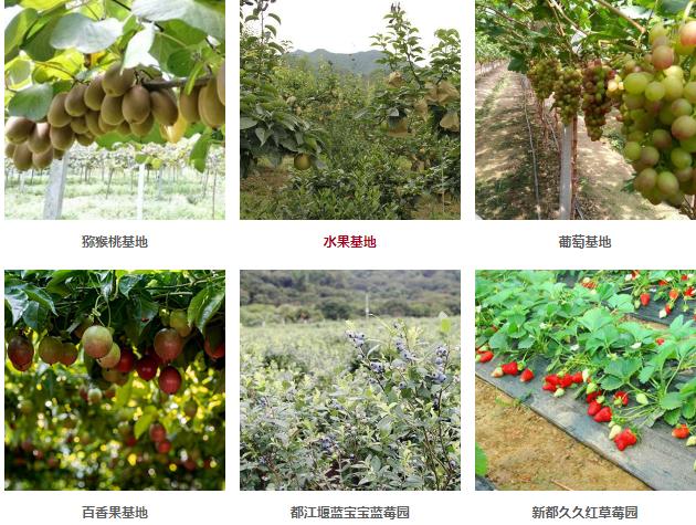 水果配送服务_奇异果/猕猴桃相关-四川省忆鲜甜农业科技有限公司