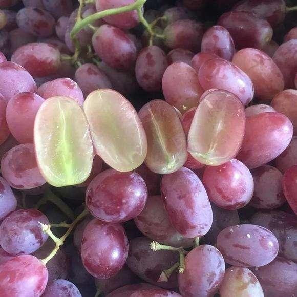 无籽红提价格_超低价葡萄-富顺县聚鑫种植家庭农场