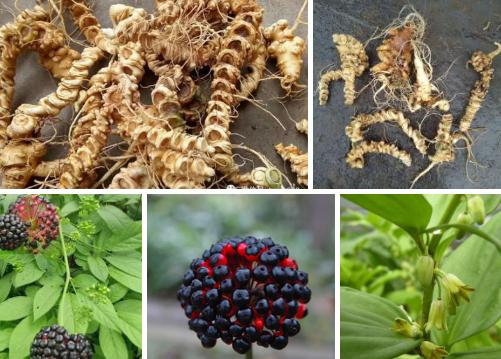 我们推荐白三七是什么药材_云南植物原药材-广南县富仁中药材种植农民专业合作社