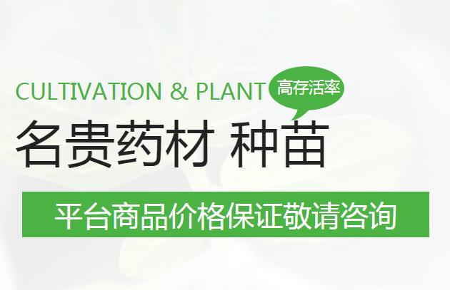 经济价值高的名贵药材种苗供应_哪里买-广南县富仁中药材种植农民专业合作社