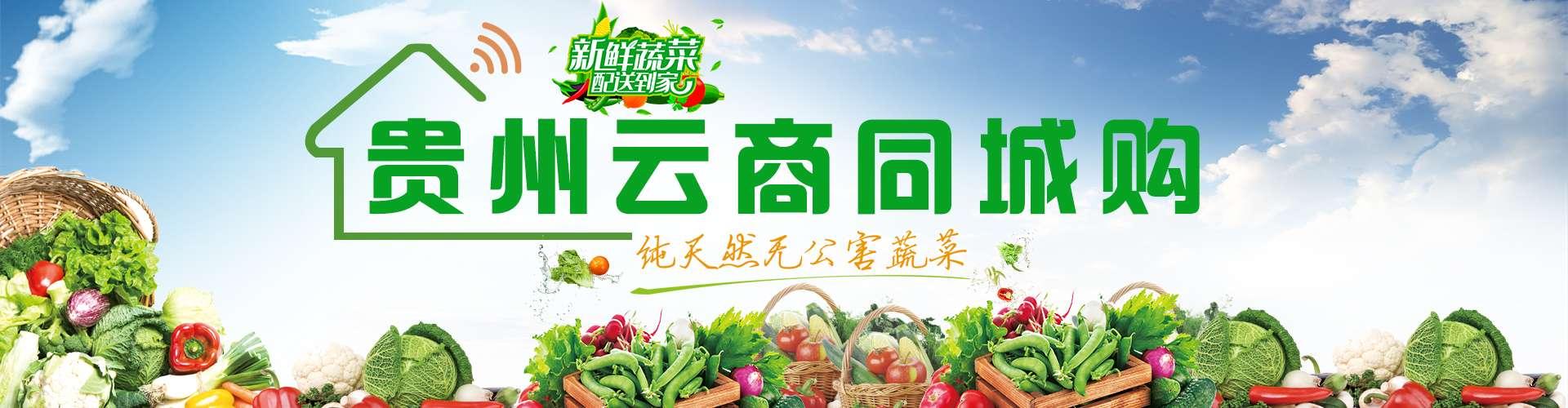 高山绿茶银球茶供应_更正宗绿茶-贵州天地互联商贸发展有限公司