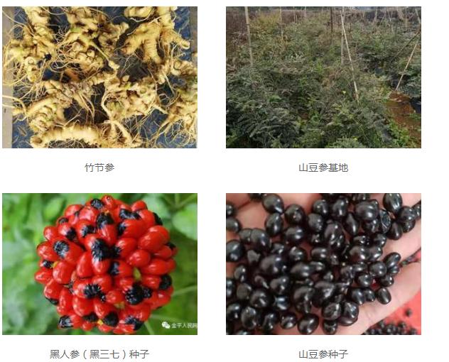 我们推荐云南药材种植基地_药材供应相关-广南县富仁中药材种植农民专业合作社