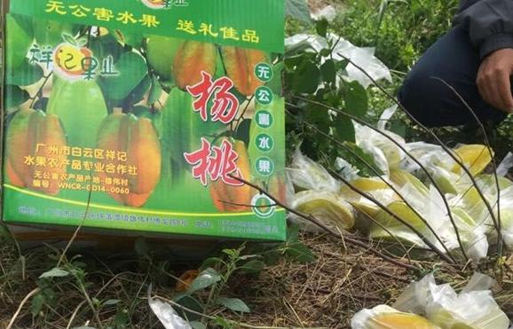 新鲜柠檬果园_白云区直供-广州市白云区祥记水果农产品专业合作社
