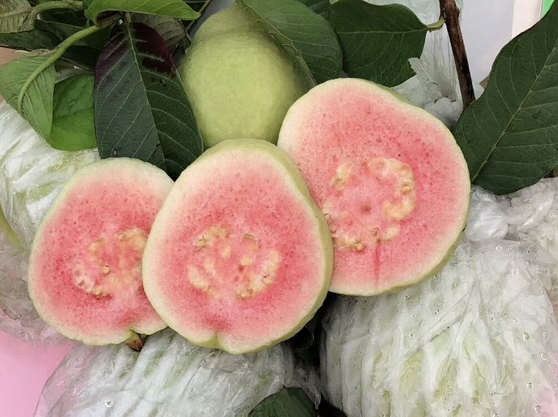 红心番石榴供应-广州市白云区祥记水果农产品专业合作社
