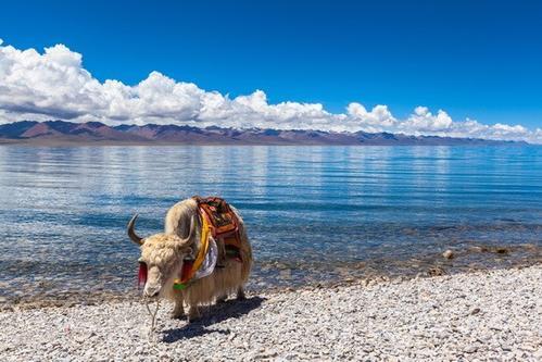 西藏阿里旅游商城_旅游相關-西藏圣和建筑工程有限公司