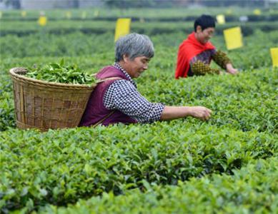 湖北恩施農產品有哪些 恩施農產品批發