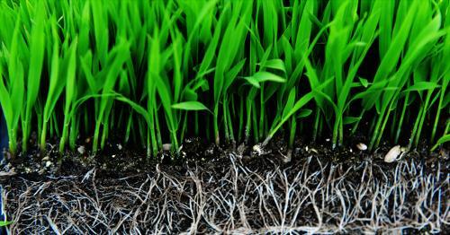 进口育苗基质批发 生物肥料配方